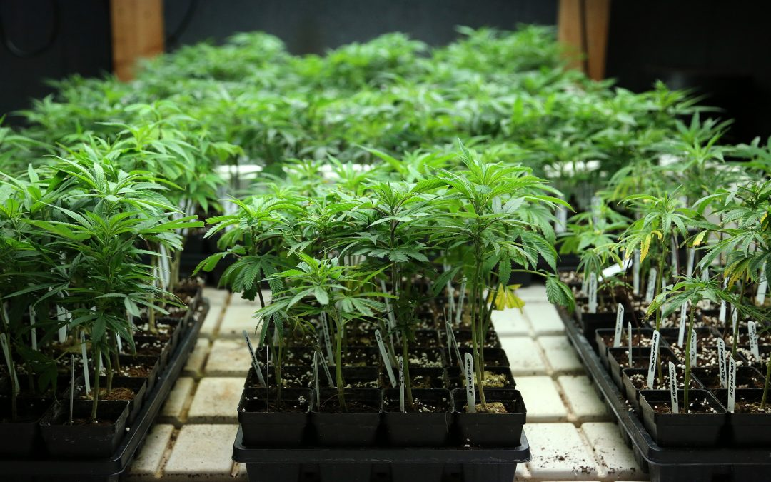 Oregon Senate Approves Proposal for Anonymizing Pot Users